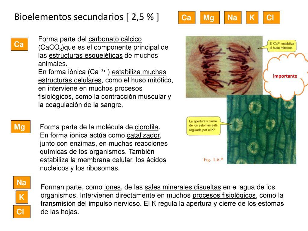 Magnífico Muscular Hoja De Cálculo De La Anatomía Molde - Anatomía ...